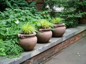 pots-grasses