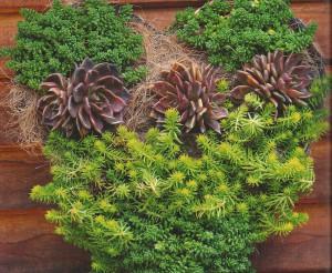 Succulents frame  - Copy