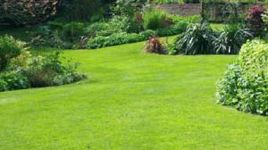 lawn (2)