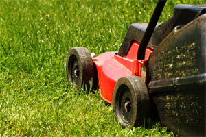 lawner-image-220076