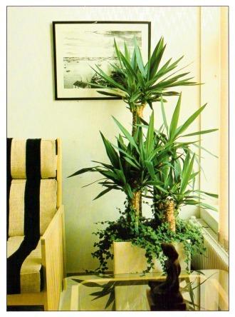Indoor plants eden garden centre for Indoor flowers and plants