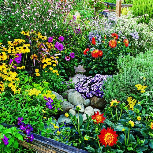 Planting For Summer Joy